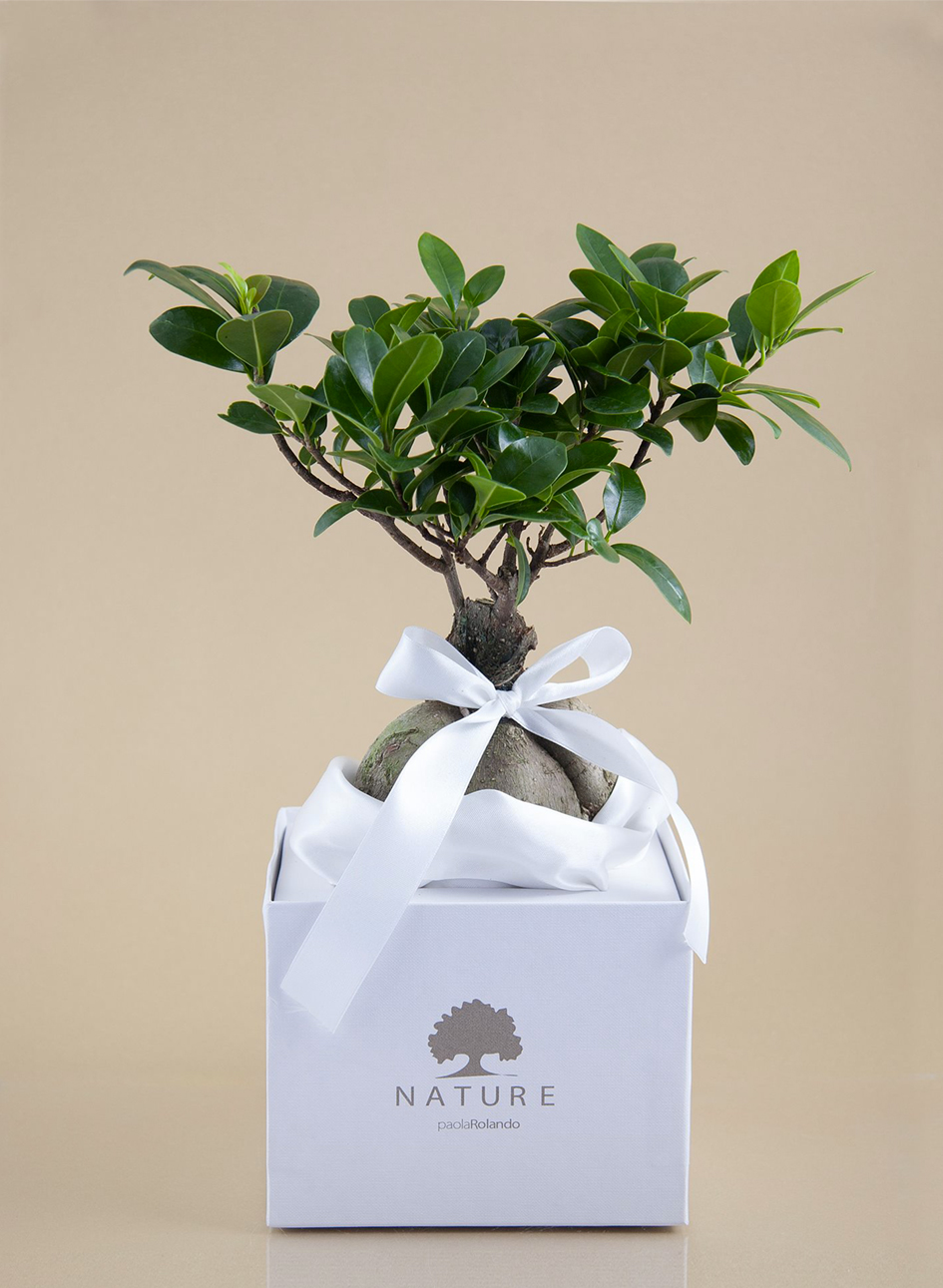 Vasi da esterno prezzi tavoli da giardino vermobil in for Vasi per bonsai prezzi